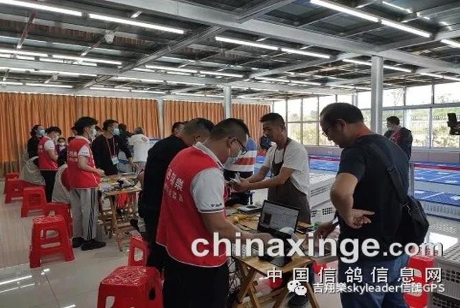 The third time cooperated with Jiangsu Yinshi international racing pigeon club of China